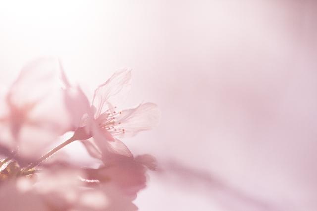 第十六首 美紅の短歌「我こころ~」短歌で紡ぐ架空の恋