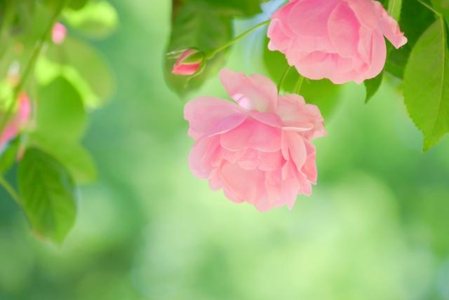 第十五首 清史の短歌「惹かれるなら〜」短歌で紡ぐ架空の恋