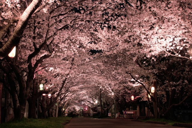 第二十首 美紅の短歌「春来たり~」短歌で紡ぐ架空の恋