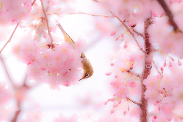 第二十四首 美紅の短歌「花終わり~」短歌で紡ぐ架空の恋